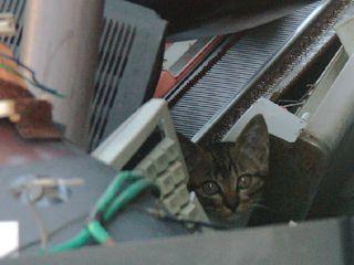 cat0505.jpg