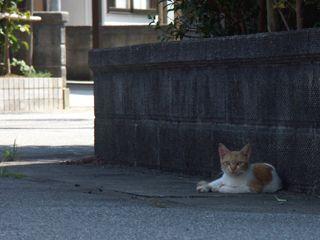 cat0507.jpg