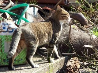 cat0601.jpg